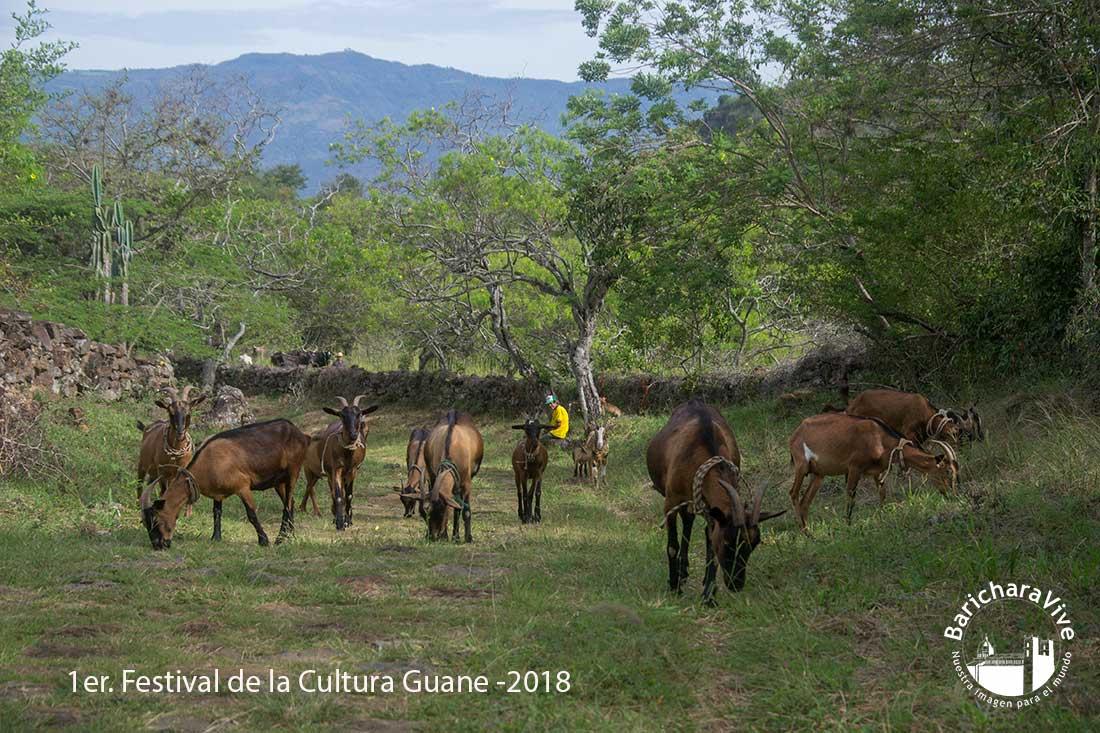 1er-festival-de-la-cultura-guane--2018-baricharavive-95