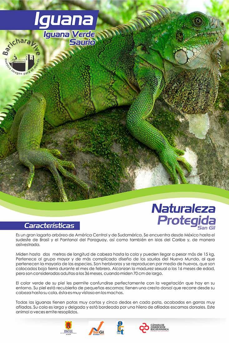 ecosimbolos-reinaldo-alfonso-baricharavive-11