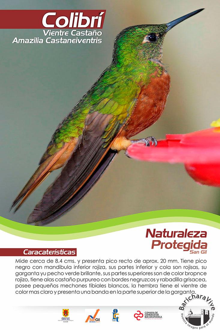 ecosimbolos-reinaldo-alfonso-baricharavive-7