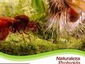 ecosimbolos-reinaldo-alfonso-baricharavive-10