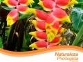 ecosimbolos-reinaldo-alfonso-baricharavive-8