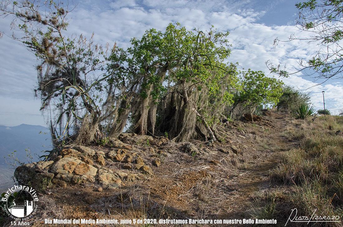 104-dia-mundial-del-medio-ambiente-barichara-5-de-junio-2020