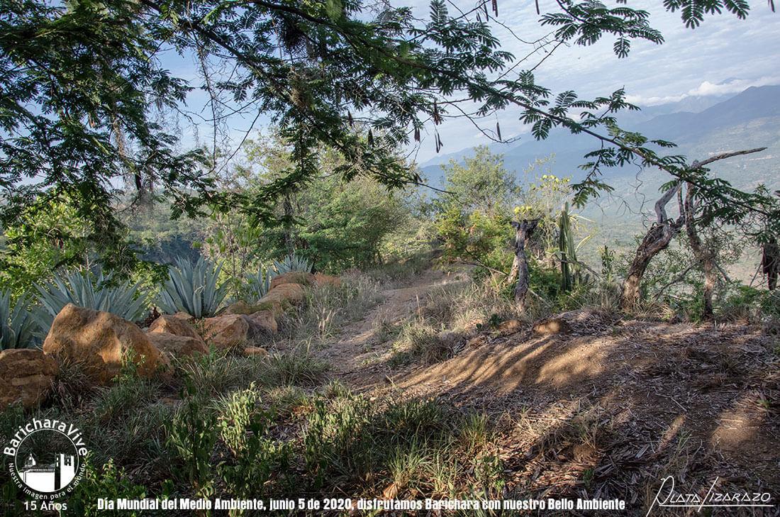 96-dia-mundial-del-medio-ambiente-barichara-5-de-junio-2020