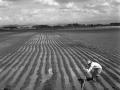 13-efrain-garcia-roldanillo-la-union-toro-campesinos-en-surcos-1968